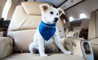 Review : ขั้นตอนการพาน้องหมาขึ้นเครื่องบินไปต่างประเทศ