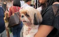 Review : แหล่งช้อปถูกใจ สบายกระเป๋า สำหรับคนรักน้องหมา
