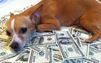 9 วิธีการประหยัดค่าใช้จ่ายด้านสุขภาพของสุนัขอย่างมืออาชีพ