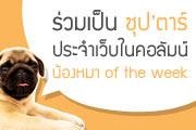 มาร่วมประกาศความน่ารัก กับวีกรรมแสนซนของน้องหมา ให้โลกได้รู้ !!