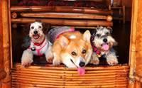 Review : สถานที่ที่ท่องเที่ยวสุดโรแมนติกสำหรับคนรักน้องหมา