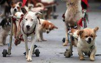 10 โรคร้าย ที่ทำให้น้องหมาต้องกลายเป็น อัมพาต
