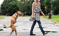 การฝึกการดำรงชีวิตให้น้องหมาพิการ