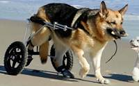 Review : รถวีลแชร์สำหรับน้องหมา