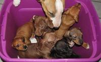 เกือบไม่รอด! พบลูกสุนัข 8 ตัวถูกทิ้ง ปิดตายในถังพลาสติก