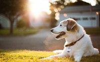 ภาวะขาดน้ำในสุนัข กับโรคสำคัญที่ต้องเฝ้าระวังเป็นพิเศษ