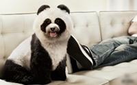Review : ขั้นตอนง่ายๆ ในการย้อมสีขนให้น้องหมา
