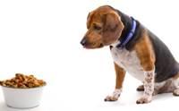 วิธีเปลี่ยนอาหารง่ายๆ ให้น้องหมาขี้เบื่อ