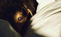 อาการ Phobia ในน้องหมา ... เรื่องใกล้ตัวที่อาจคาดไม่ถึง