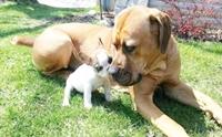 รวมภาพความประทับใจของน้องหมาต่างไซส์