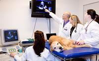 น้องหมาพันธุ์ใหญ่ กับ โรคกล้ามเนื้อหัวใจเสื่อมแบบพองขยาย