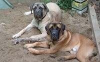 10 เรื่องน่ารู้เกี่ยวกับน้องหมาพันธุ์ใหญ่