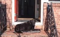 เชื่อใจหมาตัวใหญ่ให้เฝ้าบ้านได้แค่ไหน ?