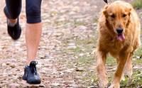 ไขข้อสงสัยสุนัขพันธุ์ใหญ่ต้องออกกำลังกายหนัก ๆ จริงหรือ?