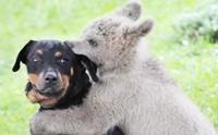 น้องหมากับเพื่อนต่างสายพันธุ์สุดน่ารัก