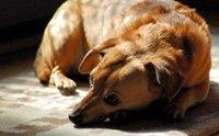 มดลูกอักเสบเป็นหนอง โรคที่เจ้าของสุนัขควรรู้ไว้