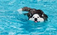 Review : รวมสระว่ายน้ำสำหรับน้องหมา