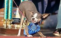 รวมหมาหน้าตาน่าเกลียดที่สุดในโลก ปี 2000 - 2013