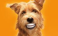 การดูแลสุขภาพปากและฟันของเจ้าตูบ เรื่องสำคัญที่เจ้าของไม่ควรมองข้าม