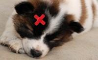 เมื่อน้องหมามีบาดแผลจะดูแลอย่างไร