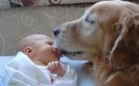 วิธีการผูกมิตรน้องหมาให้เข้ากับเจ้านายคนใหม่ของครอบครัว