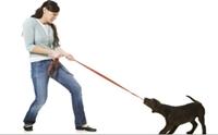 ควรใช้น้ำเสียงอย่างไรในการฝึกสุนัข