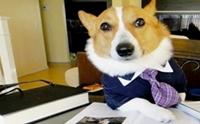 มาดูแฟชั่นเท่ๆ ของน้องหมาในลุคนักธุรกิจกัน