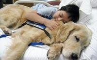 รวมภาพน้องหมากับผู้ป่วยสุดประทับใจ