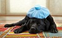 เคยได้ยินไหม ไข้ สุนัข (สุดแปลก) จากทั่วโลก