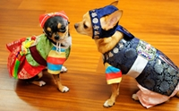 น้องหมากับชุดประจำชาติแต่ละประเทศ