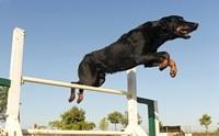 เทคนิคการฝึกน้องหมาให้เป็นมากกว่า...หมา