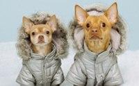 อากาศหนาวจัด ระวัง! ภาวะอุณหภูมิร่างกายต่ำในสุนัข