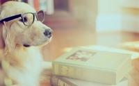 ไขคำถามคาใจ ... น้องหมาสามารถฟังคำสั่งได้หลายภาษาจริงหรือ