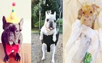 รวมภาพน้องหมาชื่อดังในโลกออนไลน์