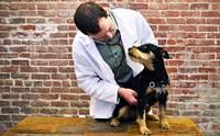 โรคเกี่ยวกับต่อมลูกหมากของน้องหมา ที่หลายคนอาจไม่เคยรู้
