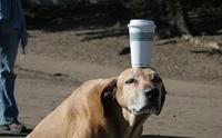 จับน้องหมาฝึกสมาธิ สุดยอดเทคนิคขจัดได้ทุกปัญหา!