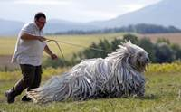 สายพันธุ์น้องหมาที่ดูแลขนยากที่สุดในโลก