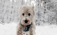 น้องหมากับหิมะ สุดน่ารัก