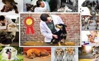 10 บทความ มุมหมอหมา ที่ได้ความสนใจมากสุดในรอบปี 2556