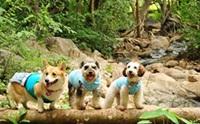 รวมภาพน้องหมาเที่ยวทั่วไทย