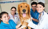 หมอเถื่อน หมอปลอม คนเลี้ยงสุนัขตรวจสอบอย่างไร