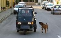 ป้องกันภัยบนท้องถนน!  ฝึกน้องหมาให้ระวังรถ