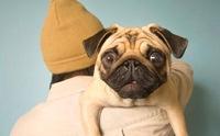 จะเกิดอะไรขึ้น ถ้าน้องหมาป่วยเป็นโรคต้อหิน