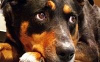 10 ภาษาตาที่บอกว่าน้องหมารู้สึกอย่างไร