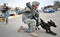 รวมรูปน้องหมาทหารขณะปฎิบัติหน้าที่