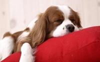 ฝึกให้น้องหมาเข้านอนได้อย่างไร