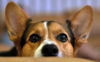 ผลิตภัณฑ์และอุปกรณ์จำเป็นสำหรับการกรูมมิ่งหมาขนสั้น