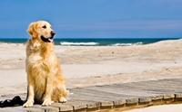 Review : สงกรานต์ลั้ลลาพาน้องหมาพักผ่อนริมหาดชะอำ