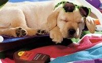 3 โรคมะเร็งผิวหนังในสุนัข ที่แสงแดด (อาจ) มีส่วน