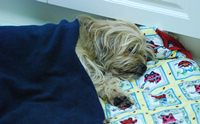 เมื่อน้องหมาป่วยเป็นโรคตับอ่อนอักเสบต้องดูแลอย่างไร